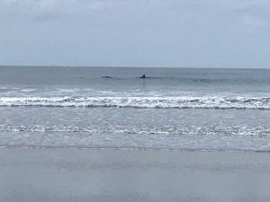 Delfines en Montañita. (Instagram)